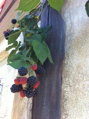 Blackberry2_2