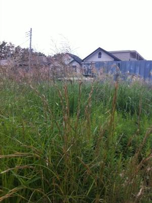 Grass_3